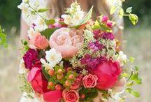 mHs Flowers / by Megan Shay