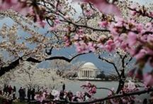 Paris on the Potomac