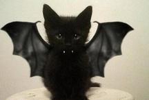 Catlady-ing