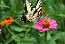 Yard - Butterfly Garden/In front