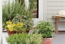 Yard - Herb Garden/Porch Pots