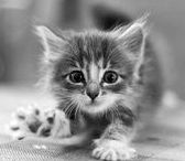 Holy Cuteness / Cute, kittens, puppies, cats, dogs, bunnies, adorable