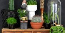 Vignettes. / Small home, accessories, and plant vignettes, that make a big impact.