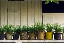 Green Home / News & tips re: keeping a healthy, non-toxic, eco-friendly home.