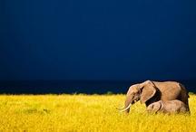Elephants, Pigs, Octopi / 3 of my favorite animals. / by Tracyene Charles