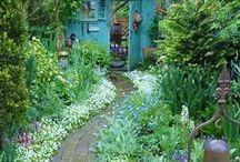Garden / De tuin. Groente en fruit verbouwen in de achtertuin. Een moestuin in de stad. Love to grow our own veggies!