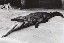 Helmut Newton / by Tracyene Charles