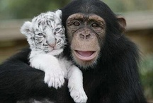 All For One & One For All / Caring for others--another thing we have in common with animals. / by Tracyene Charles