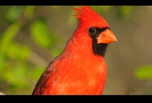 All About Birds / by Larry Cassis