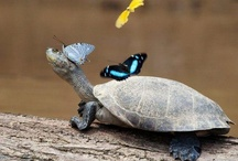 Amphibians and reptiles / by Linda Dimmitt