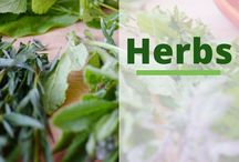 Herbs / This board features creative ways to grow your own herbs, recipes featuring herbs,herbal beauty ideas and home diy projects featuring herbs.  Everything Herbs : https://brenhaas.com/gardening/herbs/