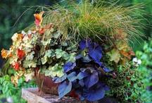 Garden {Spring} / Gardening in the Spring  / by Bren Haas