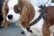 """Harness - Plaid Step-in Harness / One of our favorite strappy step-in harness! Straps separate at the """"shoulder blades"""" rather than down the shoulder, for a great fit for most dogs"""