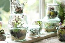Decor - Plants / by Cathie Toshach   tinsel + trim