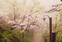 Cherry Blossoms and Pinks / For the love of the beautiful little pink and white spring blossoms that light up my life. ♥ Japan