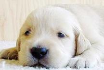 Puppy Love / by Becki Dennis