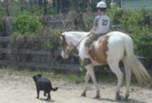 Horses and Dogs Together