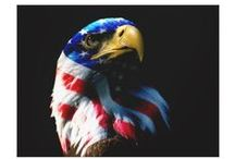 American Eagle Patriotic Prints / by Former Military Spouse ~ Military Divorce
