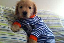 Too Much Cuteness! / by Amanda Frueh