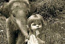 Elephants on parade  / by Victoria Everett