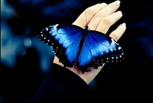 My Obsession.  /  They're just so beautiful...Butterflies.  / by Monse Sanchez