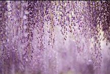 aubergine et violet