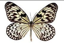 << abode   butterfly >> / by Britt Deyan