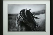 "Horses, Donkeys and Mules / ""The essential joy of being with horses is that it brings us in contact with the rare elements of grace, beauty, spirit and freedom."" - Sharon Ralls Lemon ~ Enjoy these stunning photographs of horses and equine artwork, much of it available in our shop at www.thephoenixcollectionca/collections/horses"