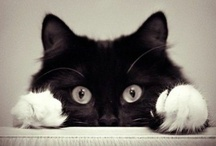 9 Lives / Cats have it all - admiration, an endless sleep, and company only when they want it. That's living!