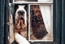 It'S GoNe tO ThE DogS... / dog, beds, dishes, pictures, diy, tutorials, food, recipes, houses, treats / by SHaBbY StOrY