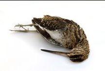 dead birds / by thewatt