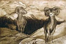 Etchings & Drawings - Animal Subjects / by Margie Manifold