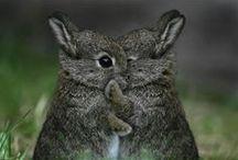 bunny honey :) / by Carole Grant