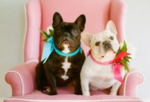 Wedding frenchies / Your frenchie should not be missing at your wedding ceremony. Find inspiration how to get ready your frenchie for the wedding.