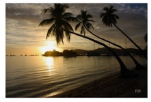 Travel in Fiji / I love Fijian photos of tropical beaches, sunsets and palm trees.  I have been lucky enough to travel to Fiji in 2004 and again in 2011. / by Rhonda Albom