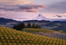 Oregon Travel / Day trips and weekend getaways throughout Oregon, from tasting in wine country to beach time on the Oregon Coast. / by Lauren Braden
