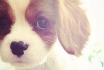 Puppy <3 / Dogs have always been my #1 favorite! / by Brittney Kudalis