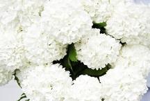 I want an all white garden!
