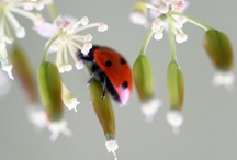 C come COCCINELLE / by Stefy Onidi