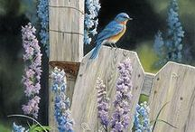 for the birds / attracting birds to your yard / by Tamara Cooper