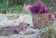 In Bloom...Gardening Parties, Picnics & Plantings / by Traci Winger McDonald