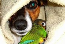 animals & pets love ♡ (mostly dogs)