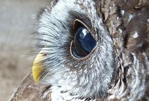 Awesome Owls / by Christina Sherwood