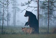 bears & such
