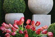 marche aux fleur {flower market}