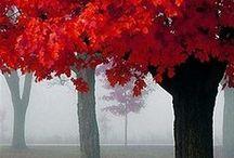 Autumn Colors / by Paula Morris
