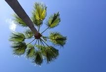 Mediterranean Gardens / Garden plants, ideas for hot Mediterranean vibes!