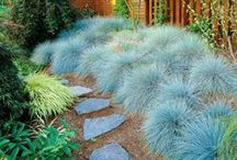 'Silver Gardens' for a warm temperate climate