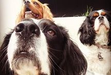 Lovin' My Puppies