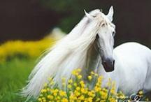 Magnificent Horse Photos
